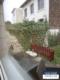 Singelwohnung mit kl. Garten im Zentrum von Eschweiler - Terrasse/Garten